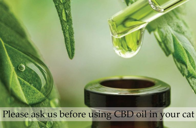 It Is Totally Possible to Change the Way CBD Tastes – Mask Its Flavor Using These Tips
