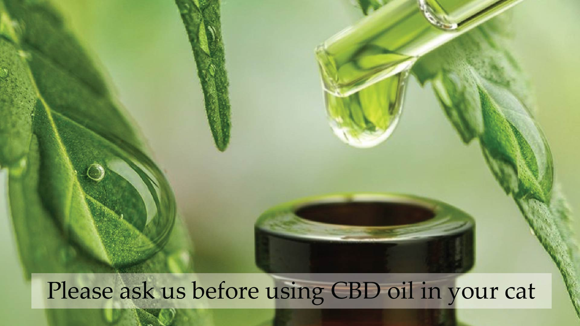 It Is Totally Possible to Change the Way CBD Tastes - Mask Its Flavor Using These Tips